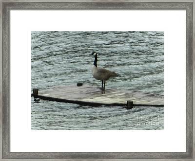 Canada Goose Lake Dock Framed Print