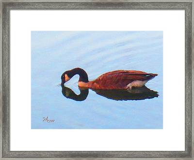 Canada Goose On Clear Lake Framed Print