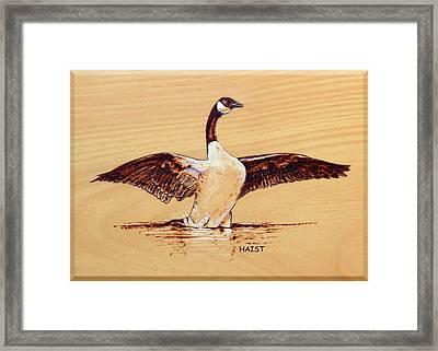 Canada Goose Framed Print by Ron Haist