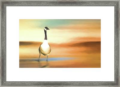 Canada Goose Framed Print by Sharon Lisa Clarke