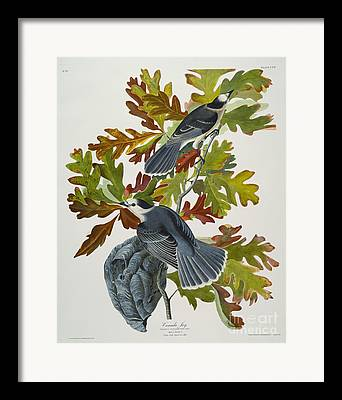 Jaybird Framed Prints