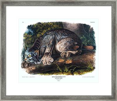 Canada Lynx Antique Print Audubon Quadrupeds Of North America Plate 16 Framed Print by Orchard Arts