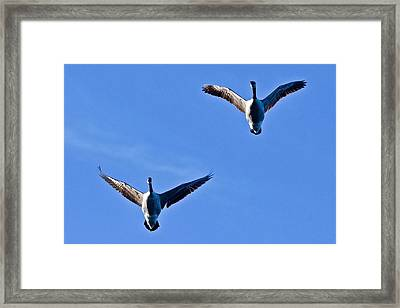 Framed Print featuring the photograph Canadian Geese 1644 by Michael Peychich