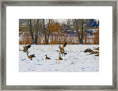 Canadian Geese At Sunrise IIi Framed Print