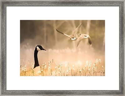 Canadian Geese Framed Print by Bob Orsillo