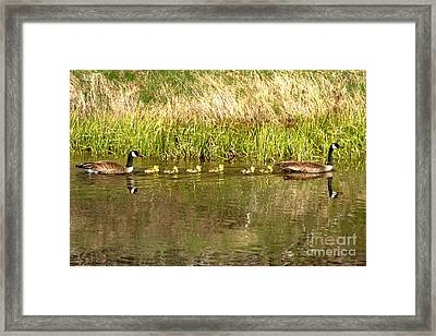 Canadian Geese Navigating The Snake River Framed Print by Adam Jewell