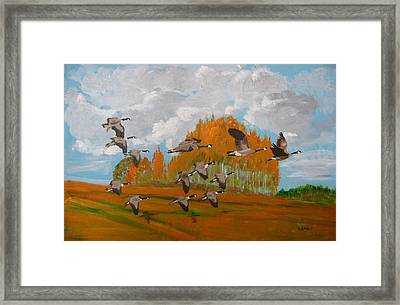 Canadian Geese Framed Print by Richard Le Page