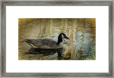 Framed Print featuring the painting Canadian Goose by Steven Richardson
