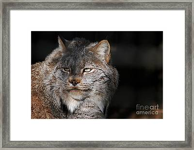 Framed Print featuring the photograph Canadian Lynx  20130107_57 by Tina Hopkins