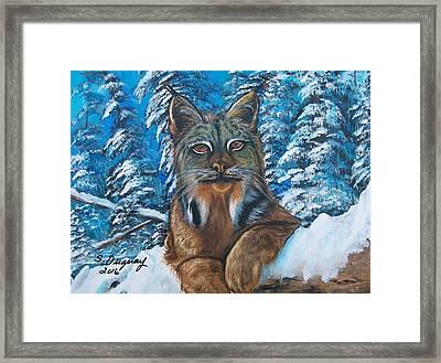 Canadian Lynx Framed Print by Sharon Duguay