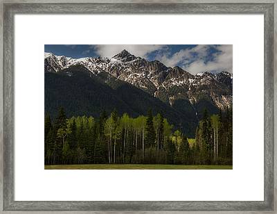 Canadian Rockies With Aspen Trees 5344 Framed Print
