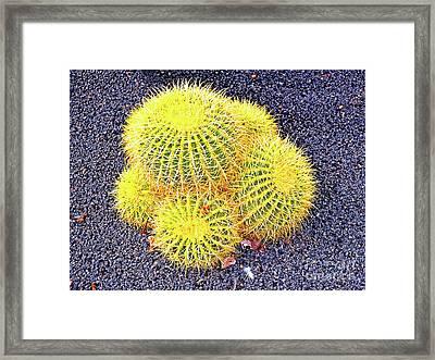 Golden Globe Cacti Framed Print by Wilf Doyle