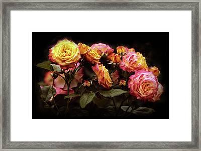 Candlelight Rose  Framed Print by Jessica Jenney