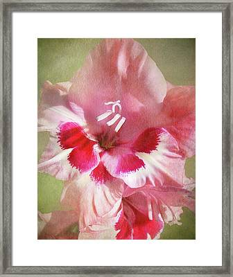 Candy Cane Gladiola Framed Print