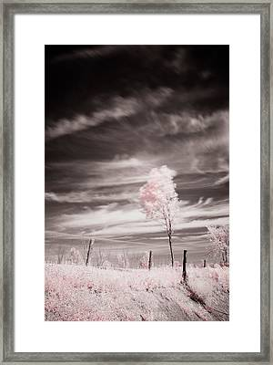 Candy Cotton Dream Framed Print by Lea Seguin