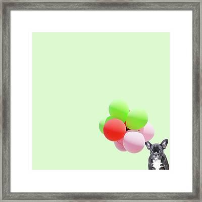 Candy Dog Framed Print