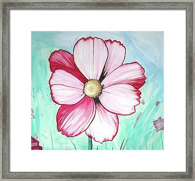 Candy Stripe Cosmos Framed Print