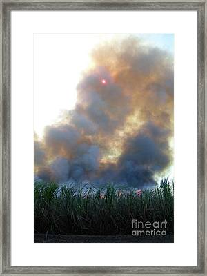 Cane Corona I Framed Print by Alexander Van Berg