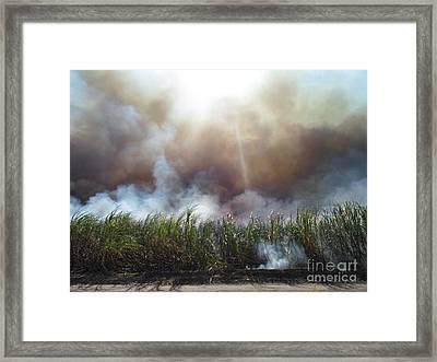 Cane Corona II Framed Print by Alexander Van Berg