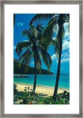 Caneel Bay Palms Framed Print by Kathy Yates