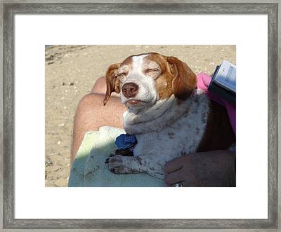 Canine Bliss Framed Print by Marnie Malone