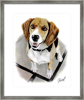 Canine Cutie Framed Print by Ferrel Cordle