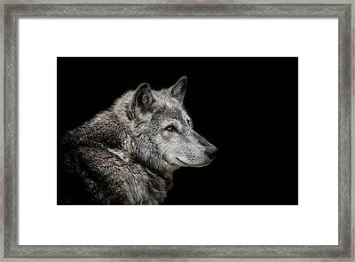 Canis Lupus Framed Print by Paul Neville