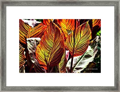 Canna 26106hdr Framed Print