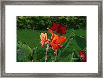 Canna 5 Framed Print by Padamvir Singh