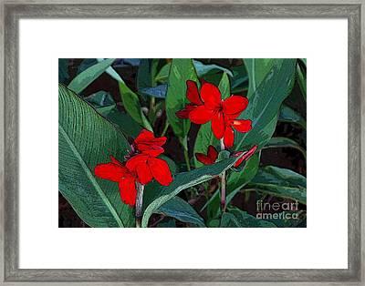 Canna 7 Framed Print by Padamvir Singh
