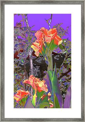 Canna Abstract 6 Framed Print by M Diane Bonaparte