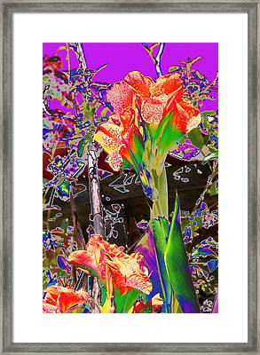 Canna Abstract 8 Framed Print by M Diane Bonaparte