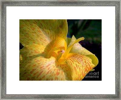 Canna Framed Print by Addie Hocynec