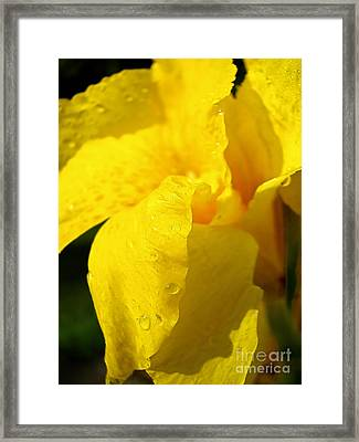Canna At Sunrise Framed Print by Todd A Blanchard
