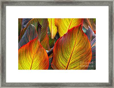 Canna Beleave The Colors Framed Print by Gary Holmes
