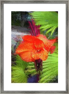 Canna Lily Red Bloom Framed Print by Mona Stut
