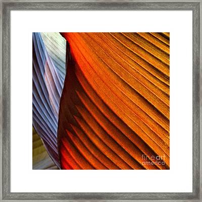Canna Canyon Framed Print