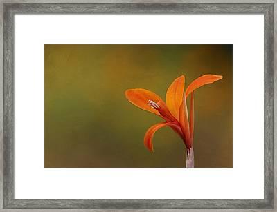 Canna Framed Print