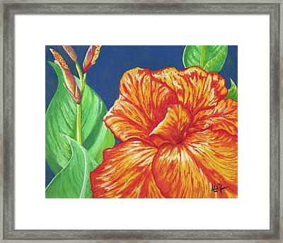 Canna Flower Framed Print by Adam Johnson