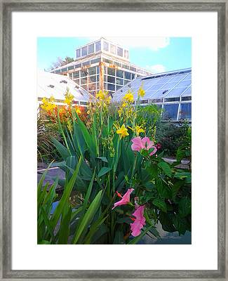 Canna, Hibiscus, And Greenhouse Framed Print