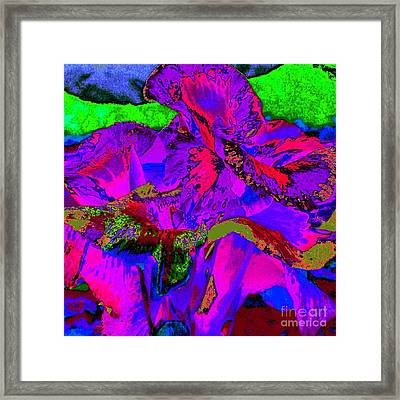 Canna II Framed Print by Loko Suederdiek