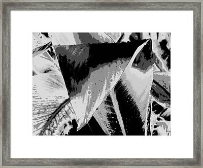 Canna In Shades Of Grey Framed Print by Beth Akerman