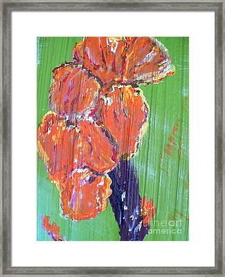 Canna Lilies 2 Framed Print by Craig King