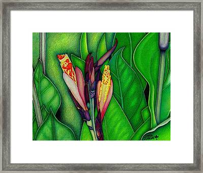 Canna Lilies Framed Print by Lorrie Cerrone