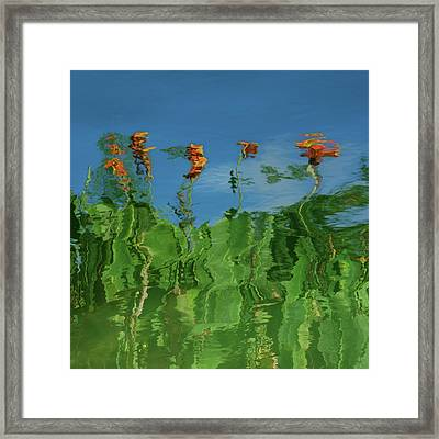 Canna Lilies Reflected Framed Print