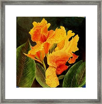 Canna Lilies Framed Print by Vickie Voelz