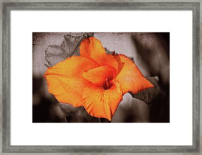 Canna Lily 1 Mission Bay Framed Print