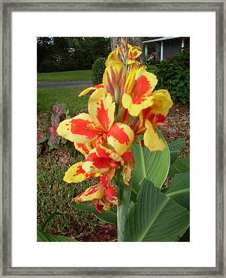 Canna Lily 2 Framed Print by Warren Thompson