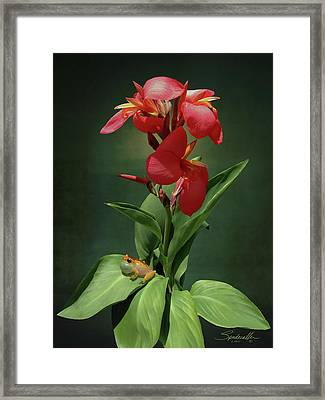 Canna Lily And Hourglass Tree Frog Framed Print