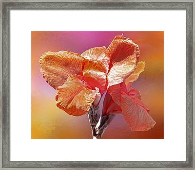 Canna Lily Framed Print by HH Photography of Florida